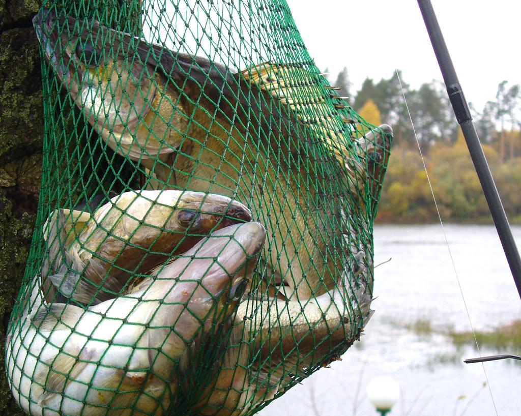 ловля рыбы сетью закон